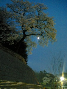 Sakuraandmoon