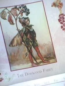 Dogwoodfairy