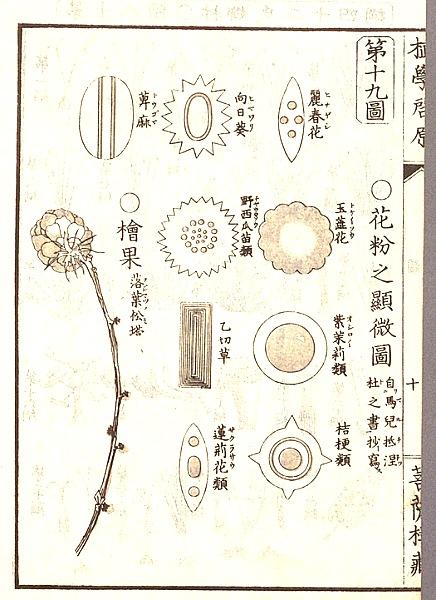 046microscope_syokugakukeigan_16r_2
