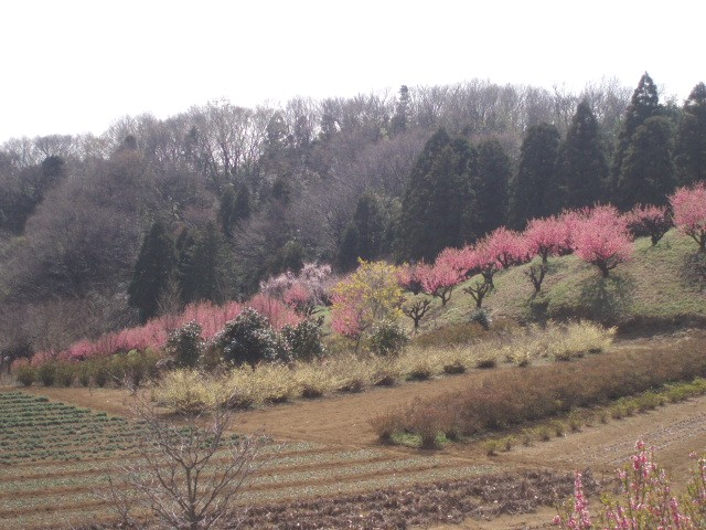 Momohidari