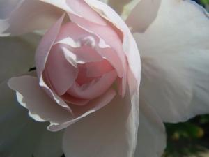 14_20190508aobagenerous-gardener