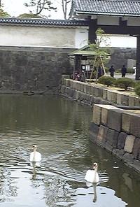 20120419higashigyoen11