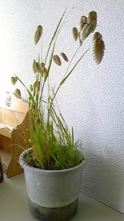 20120514kobansou3