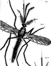 Biblia_naturae_sive_historia_insect