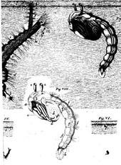 Microscope_biblianaturae2