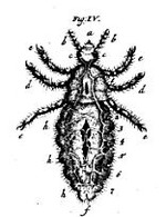 014microscope_sive_historia_insecto