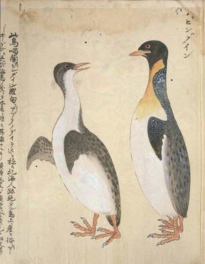 Doi_hottakinpu_penguin