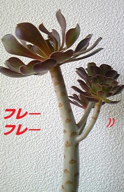 20130811kurohoushi6_3