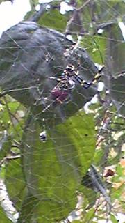 Spider20131023_2