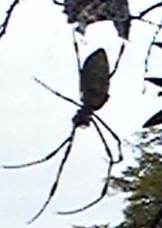 Spider20131023_4