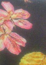 20140805liberty_floral_eve6