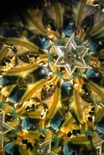 20141105sekiikazuo_kaleidoscope10us