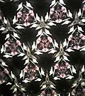 20141105sekiikazuo_kaleidoscope26m