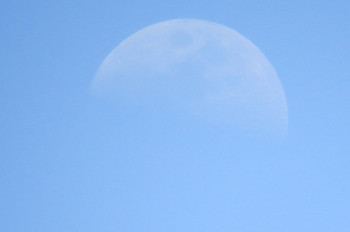 I20150426nemophila_moon_02_7077