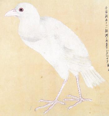 Gabicho_32kinkyoshirogarasu_32kinky