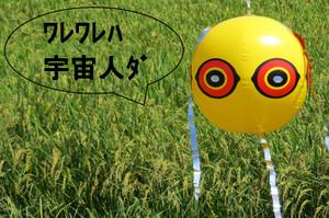1_20150920tambo1_mini