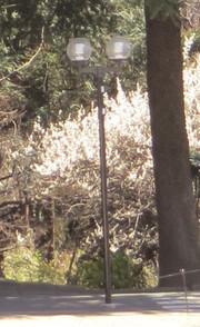 20160302himarayasugi09_light