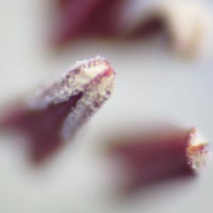 20160403nemophila5
