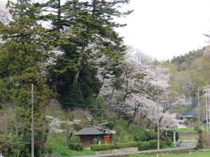 20160406satoyama04