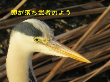 20161214aosagi1short
