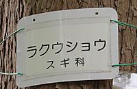 20180711rakuushou5