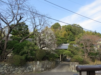 2020_0220hayabuchi1